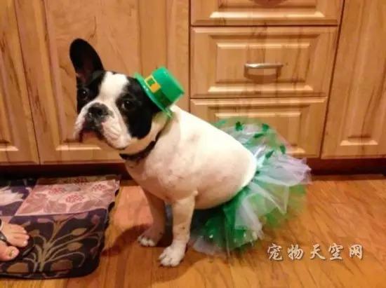 不忍直视的动物节日打扮 总有一张让你笑的肚子痛(二)