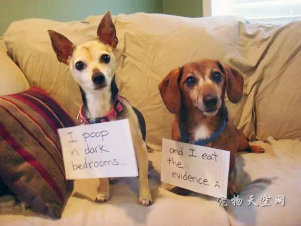 细数那些二货狗狗的罪行,让人哭笑不得(一)