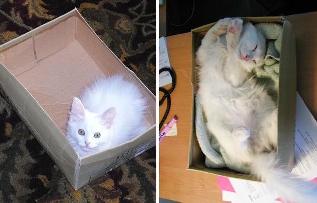 """喵星人版的""""太空舱"""",国外设计师专门为猫咪做的产品"""
