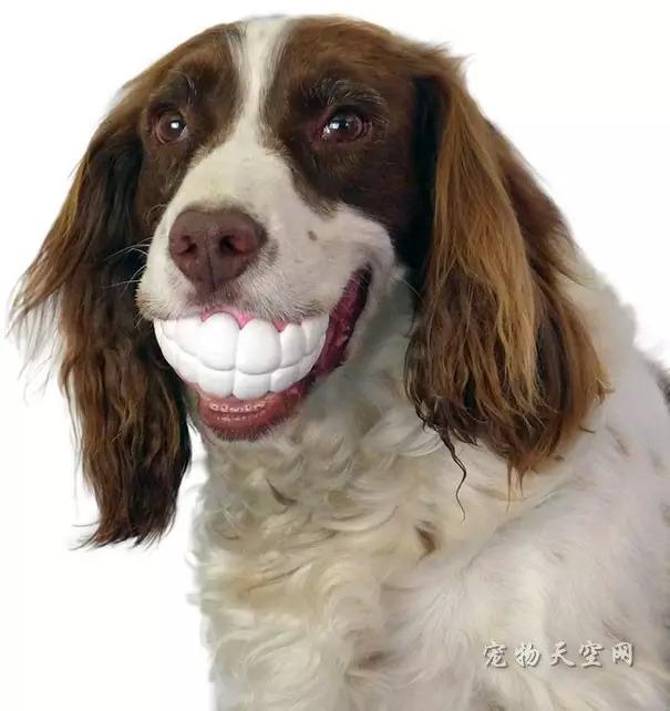 """遇到一只霸气外漏的狗狗 一只""""白富美""""淡定不了"""