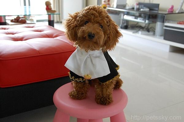 泰迪犬容易得的疾病  宠物主人一定要收藏的疾病防治