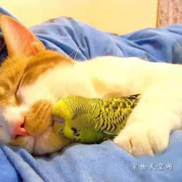 动物们不可思议的睡姿 彻底萌进你的心窝里(二)