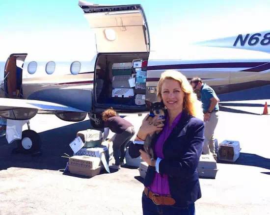 飞行员志愿者开飞机带即将被安乐死的狗狗找新家