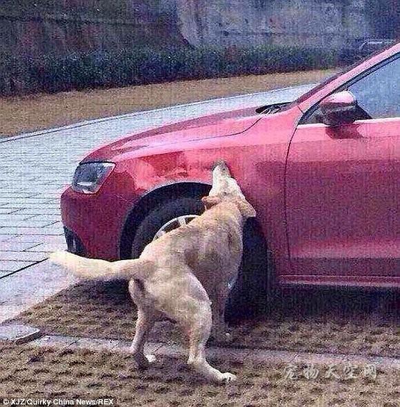 车主赶走流浪狗 没想到引来一群狗的报复