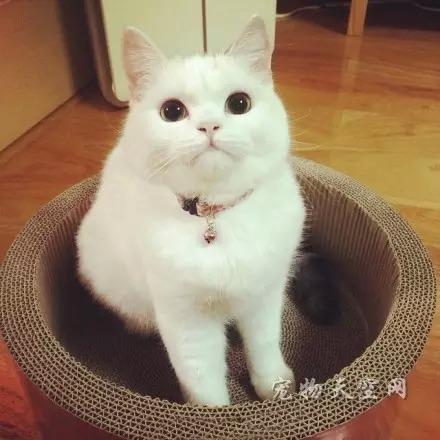 猫生性孤僻 有很强的独立性和妒嫉心