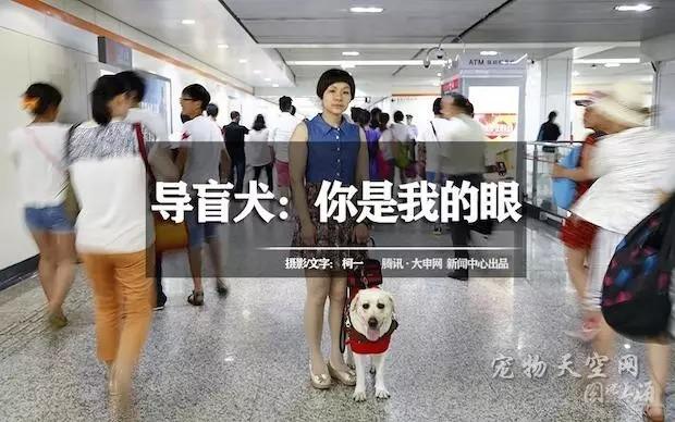 图说上海·导盲犬耳斯滨,你是我的眼