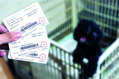 上海一女士为狗买套房子  因扰邻被投诉多次
