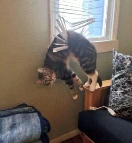 让人爆笑的猫咪照片 果然是喵星人
