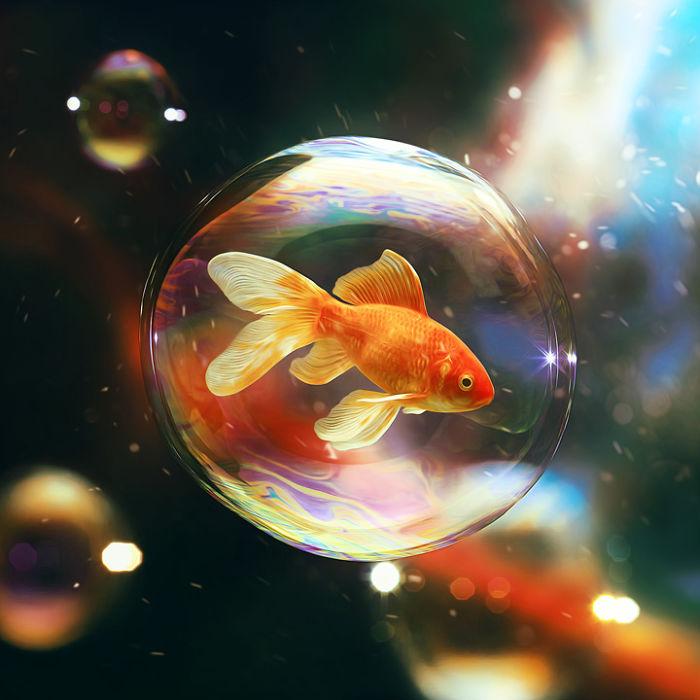 摄影师作品:动物系列的高清3D照片