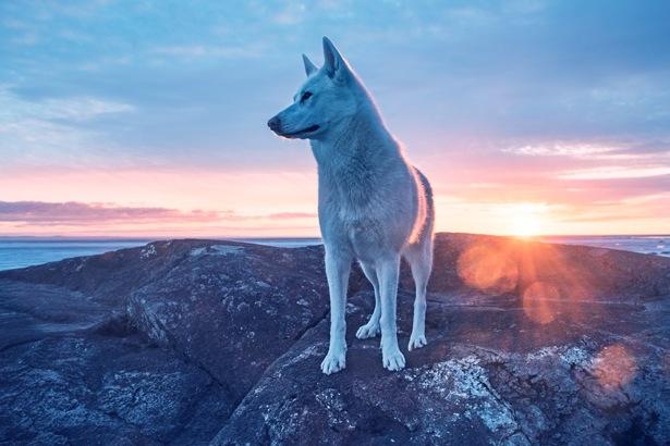 流浪狗被领养后 从此过上了周游世界的幸福生活