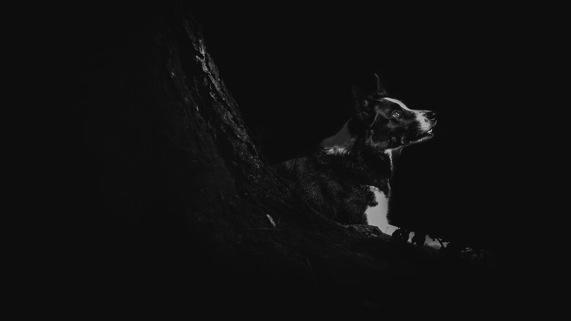 我把自己对动物和摄影的爱 融入这些照片中