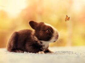小兔子如何长大的