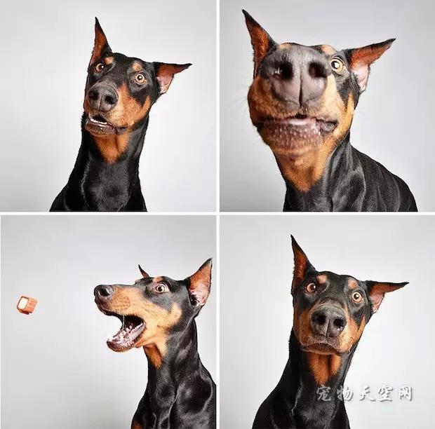 犬心丝虫是什么?怎么防治心丝虫?