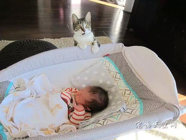 夫妻忘了告诉猫:他们有了北鼻 猫看到后彻底惊呆了