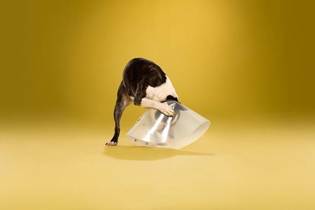 给戴耻辱罩的狗狗们拍一个专辑