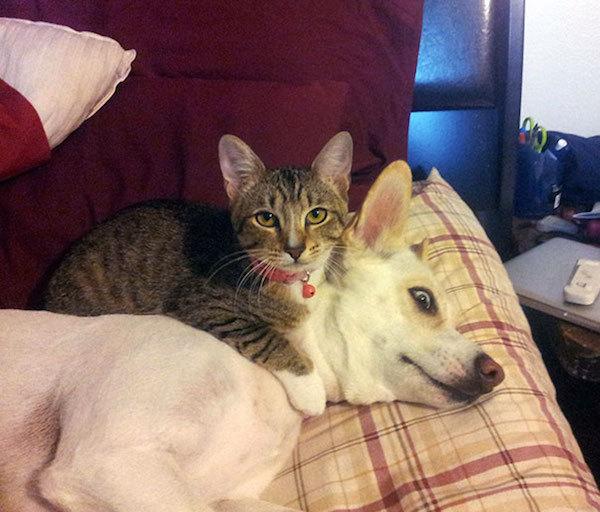 你知道猫咪最喜欢在哪里睡觉吗?来看看吧