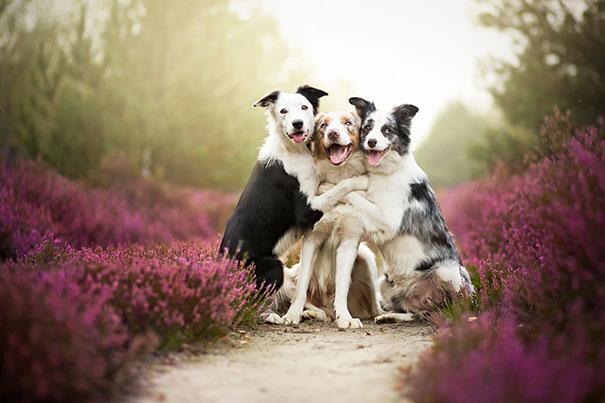 宠物美容对宠物有什么好处?