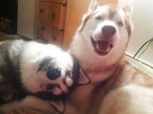 养狗狗要时刻注意它的牙齿疾病