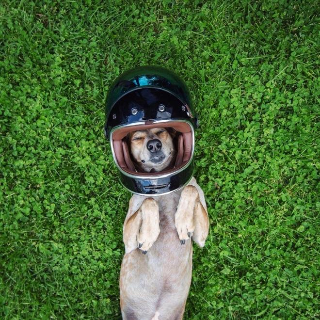 摄影师带着狗狗Maddie开始一场史诗般的冒险旅行