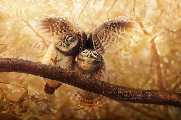 泰国摄影师捕捉到猫头鹰的一些照片,美爆了!