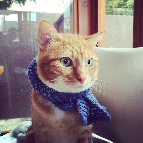 我的猫不亲人,该不该送走,求解答?