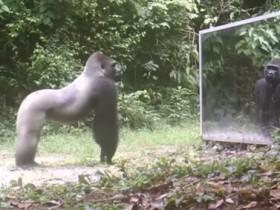 实拍森林中动物初次照镜子 引人爆笑(组图)