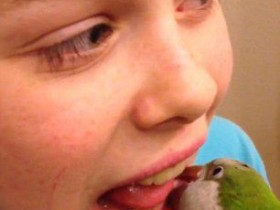 美国一只鹦鹉第六次帮小主人拔牙