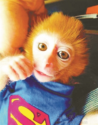 可以把猴子当成宠物养吗?养猴子算不算犯法?