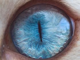 猫咪的眼睛