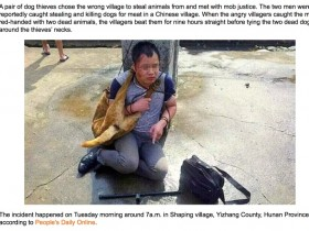 中国偷狗贼在国外媒体报道 到底是谁的错