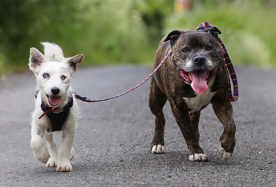 养两只和睦相处的宠物,是一只什么样的体验?