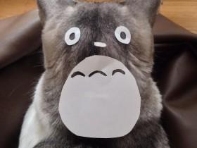 日本网友突发奇想 把猫咪变成龙猫