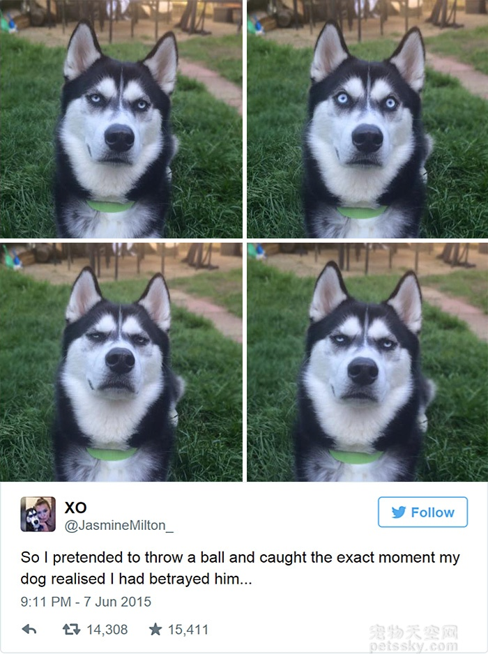 主人假装扔球 捕捉到狗狗意识到被骗的表情