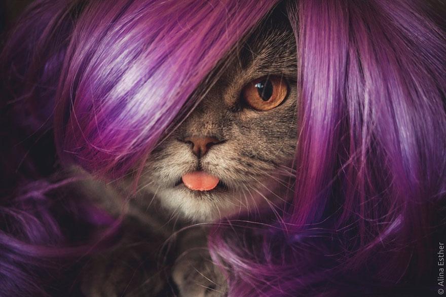 """""""爱因斯坦""""猫网上爆红:因喜欢把舌头耷拉出来"""