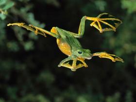 世界上最酷的青蛙和蟾蜍(组图)