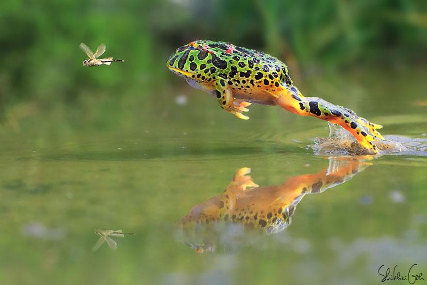 青蛙与蟾蜍