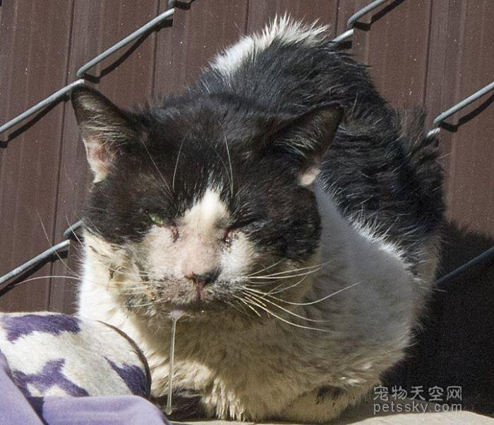 每一只流浪的猫咪都是折翼的天使 爱心让它们重回天堂