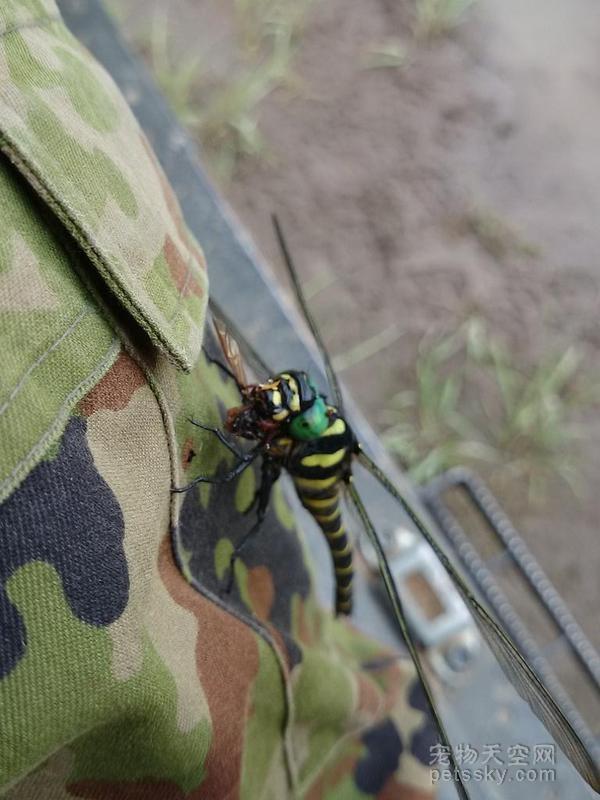 网友看到蜻蜓在他膝盖上做的事情后 傻眼了
