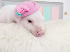 动物们戴上帽子:可爱指数翻一倍