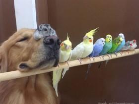 """最不可思议的""""好基友""""组合:一条狗、一只仓鼠和八只鸟"""