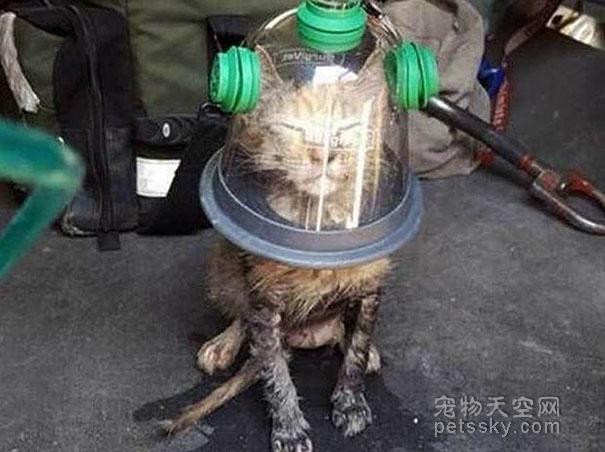 宠物的救命神器:宠物专用氧气罩