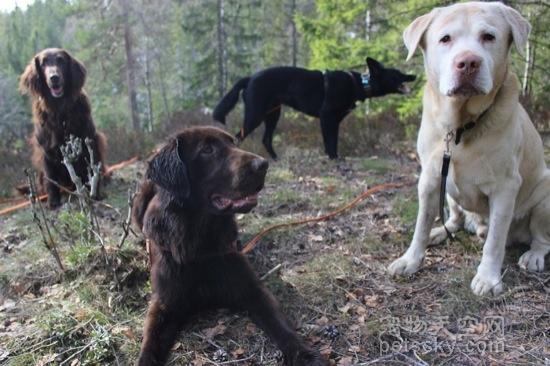 遛狗时,不给狗拴狗绳的人是什么心理?