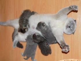 猫咪意识到自己当妈妈后 它那绝望的表情彻底亮了