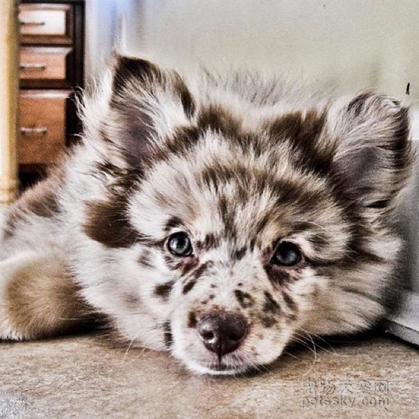 25张串串狗的可爱照片