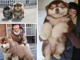 25张串串狗又萌又可爱的照片 它们也值得去爱护