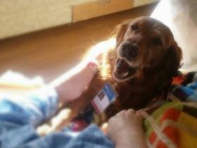治疗犬陪伴病人走完最后一程 美国治疗犬JJ的故事