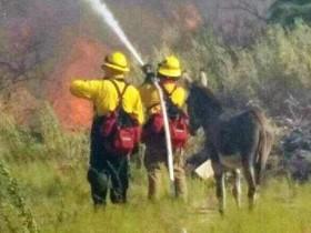 """消防员在森林大火中救了一头驴 竟成了他们的""""甩不掉的跟班"""""""
