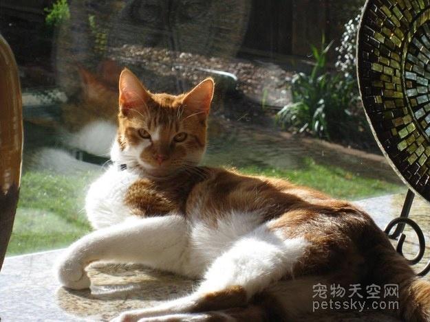 """""""学霸""""猫咪喜欢在学校里游荡 校方就为它办了一个学生证"""