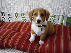 分享14种混血狗狗的照片 串串狗也是非常可爱的