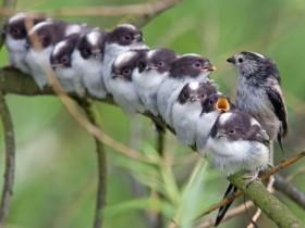 发现宠物鸟情绪不好的时候 可能就是鸟儿发情了